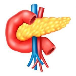 Ecografia Pancreatica