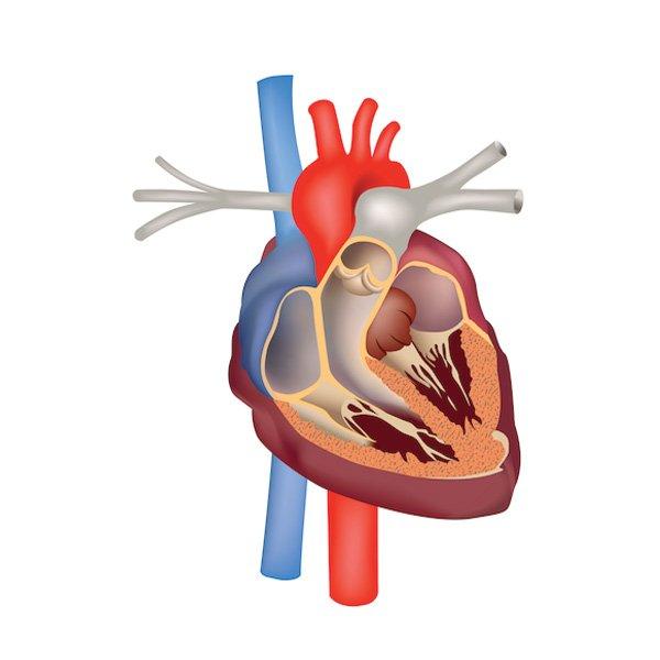 Ecocardio