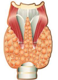 Ecografia tiroidea